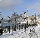 Сезонное жилье в Черноморском